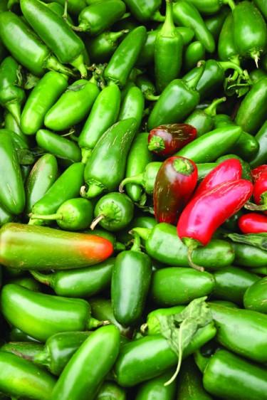 Chili 'Jalapeno'. Foto: Mr. Fothergill's