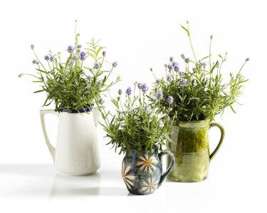 Gör-det-själv med växter.