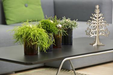 Krukväxter med julkänsla. Foto: Floradania