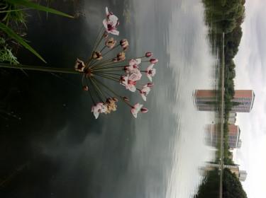 I Pildammsparken i Malmö pågår ett stadsodlingsprojekt med målet att återskapa och etablera vattenvegetation.