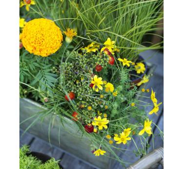 Tropikerna - färgglada blommor. Foto: Blomsterfrämjandet/Peter Carlsson