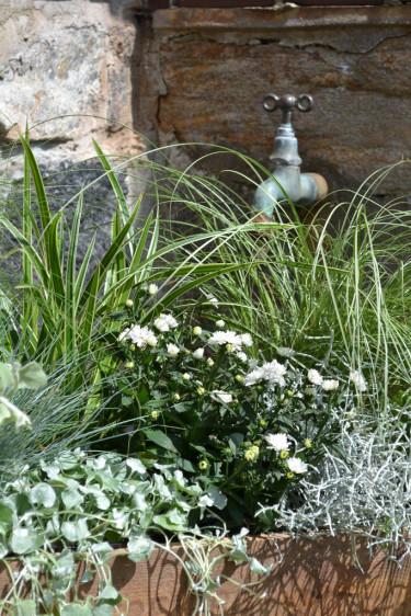 Mix av prydnadsgräs och sommarblommor.  Foto Blomsterfrämjandet