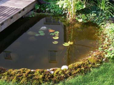En damm med mossa, ormbunkar, murgröna, näckrosor och kaveldun skapar känslan av skogstjärn i den lilla trädgården.