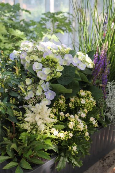 Vit sensommarplantering. Foto: Blomsterfrämjandet