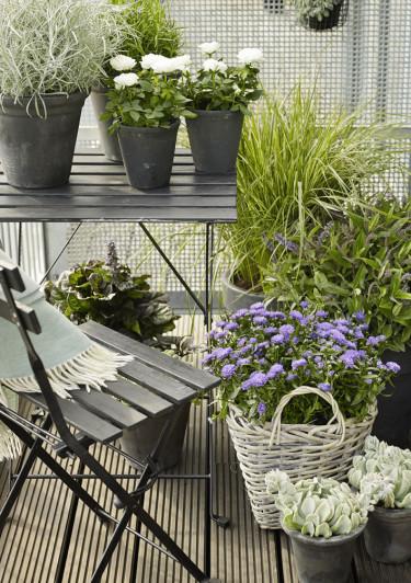 Ställ växterna på olika höjder för att skapa läcker effekt och dimension åt ditt arrangemang. Foto: Floradania