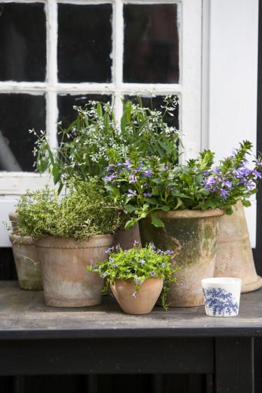 """Motion bland vackra växter är inte dumt alls. Här ser vi Euphorbia """"Diamind Frost"""", femtunga, timjan och lindernia. Foto: Floradania"""