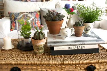 Krukväxterna tar ny plats våra hem!
