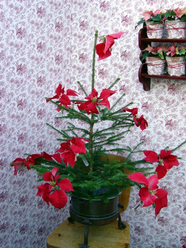 Små provrör med snittade julstjärnor har snurrats fast på granen. Granen utsöndrar etylen, en gas som påskyndar åldrandet hos blommor, därför är det bra att låta granen ligga ett tag innan man tar in den.