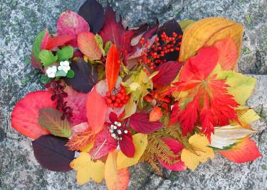 Lysande färgglada blad. Foto och arr: Sylvia Svensson