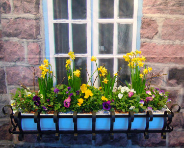 Vårlig balkongslåda. Foto: Sylvia Svensson