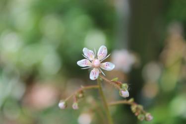 En ljuv liten skönhet i min trädgård!