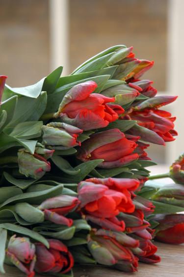 Ett fång 'Rococo'. Foto: Blomsterfrämjandet/IBC.