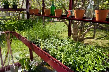 Driv upp dina egna plantor i växthuset! Foto: Willab Garden