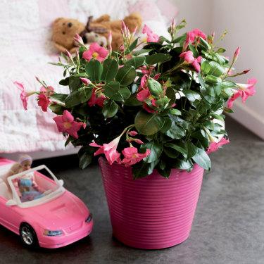 Sommarens växttrend är renodlad sinnlighet: Pure Living.
