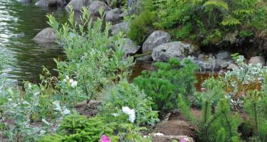 Trädgården måste få växa fram i sin egen takt.  Foto: Kristina Bonander.