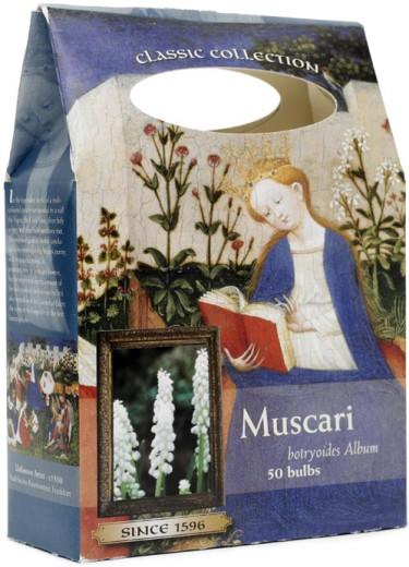 _Muscari_.