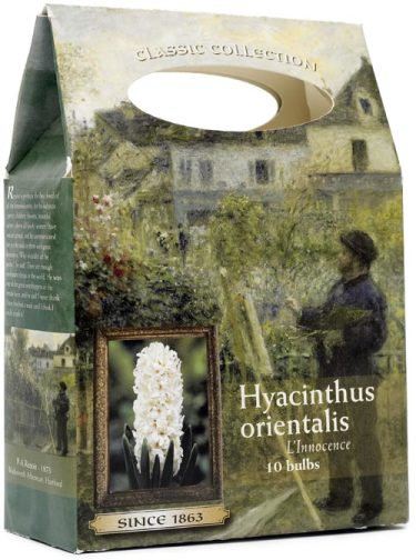 _Hyacinthus_.
