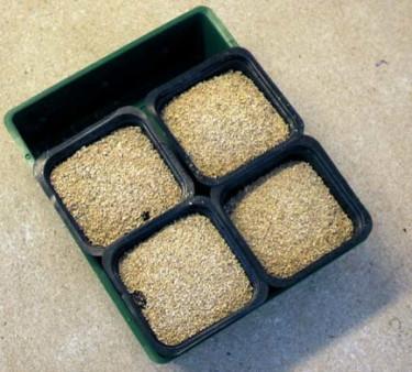 Sådd med Vermiculite.