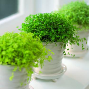 Vi behöver det gröna inne på vintern. Men vattna med måtta! Foto: Floradania