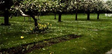 Vacker blommande gräsmatta eller ett ogräsproblem. Foto: Eva Wirén.