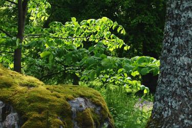 Du kan lägga till eller dra ifrån bland det som naturen skapat när du anlägger din egen naturträdgård.