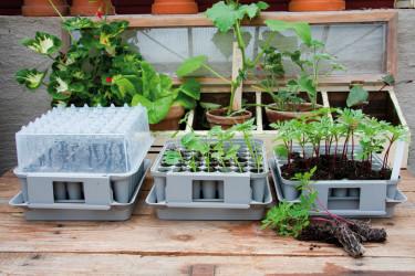 Att [Fröså i pluggbox](internal:node/64849) är praktiskt och ger många plantor på liten yta. Foto: Nelson Garden