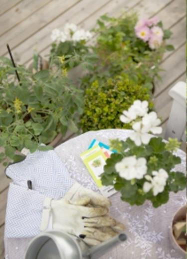 Nyttoväxter och dekorativa växter samsas i blomstrande enkelhet! Foto: Blomsterfrämjandet/Gustaf Emanuelsson