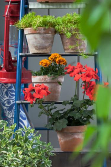 Idéerna kring hur du kan placera dina växter är många. Foto: Blomsterfrämjandet/Anna Skoog