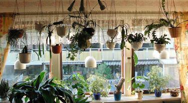 Kaktusfönster. Foto: Sylvia Svensson