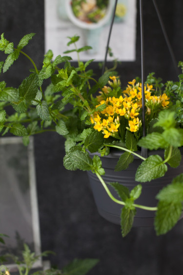 Grönt är skönt Foto: Blomsterfrämjandet/Minna Mercke Schmidt