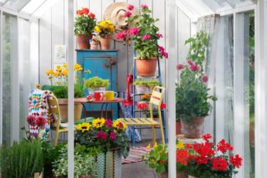 Starkt rött och piggt gult några av inslagen här. Foto: Blomsterfrämjandet/Anna Skoog