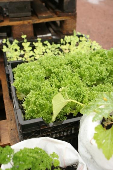 Plastbackar funkar utmärkt för växterna att bo i.