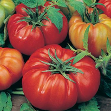 Italienska 'Costoluto Fiorentino' som ger stora bifftomater. Mycket välsmakande och saftiga. Läs mer: [Odla.nuShop](http://erbjudande.odla.nu/fro/?c=5)