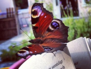En vacker fjäril med det spännande namnet Påfågelsöga hälsade på mig.