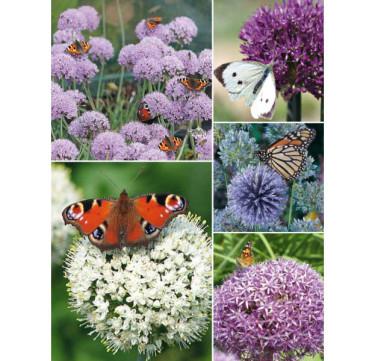 Collection Butterfly. Foto: Odla.nu