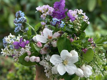 Mycket kan man hitta både i trädgården och i naturen. Foto: Sylvia Svensson