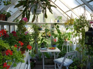 I Carins växthus lever sommaren en bit in i oktober. Visst kan vi tänka oss att ha det så här!