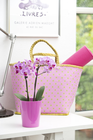 Orkidé, _phalaenopsis_, är ytterligare en i svenska hem mycket lättskött och omtyckt krukväxt. Foto: Floradania