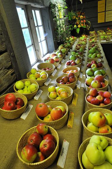 En del av alla äpplena på fruktutställningen. Foto: Bernt Svensson