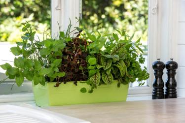 Kryddträdgård på fönsterbrädan Foto: Floradania