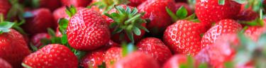 Frukt & bärbuskar