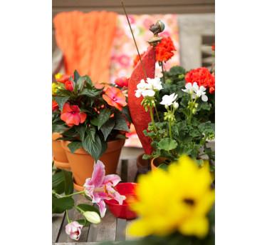 En av årets tre trädgårdstrender har fått namnet: **Nya horisonter**.   Foto: Blomsterfrämjandet/Gustaf Emanuelsson