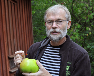 Björn Aldén visar fruktutställningens största och minsta äpple. Foto: Bernt Svensson