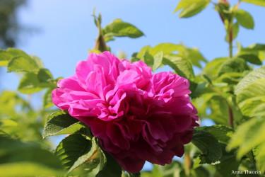 Blommande skönheter får man aldrig för många av!
