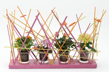 Söta miniväxter i skojigt och annorlunda arrangemang. Foto: Floradania