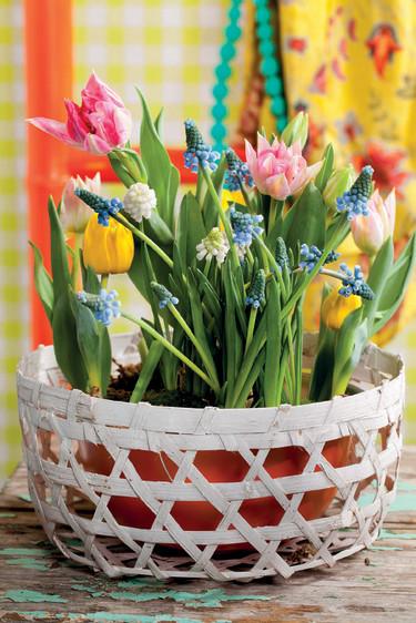 Tulpaner och pärlhyacinter