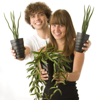 Ge din tonåring en lättskött krukväxt, som skapar trivsam atmosfär i en vardag som ibland kan kännas stressig. Foto: Floradania