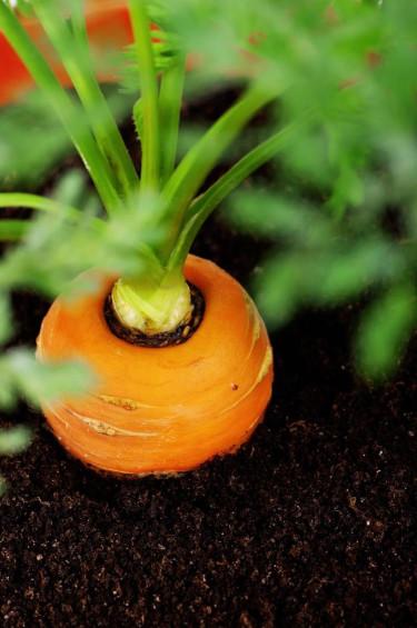Vulkanisk näring för din trädgård!
