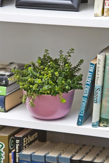 Glöm inte att ge krukväxten i bokhylla en skvätt på din vattningsrunda i huset!  Foto: Floradania