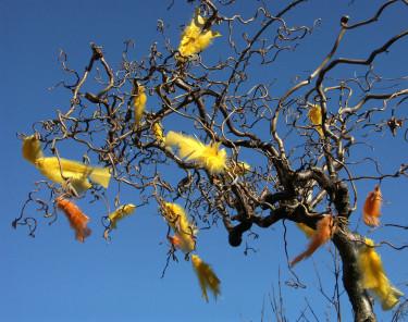 Påskfjädrar i ormhasseln. Foto och arr. Sylvia Svensson